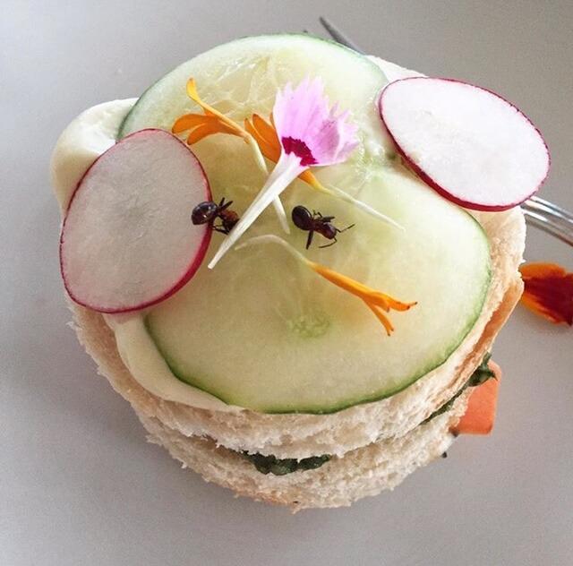 Mini smörgåstårtor med blom blad och myra