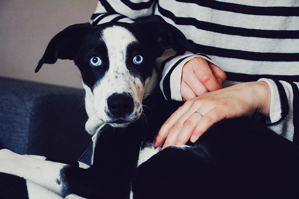hunden_elsie2