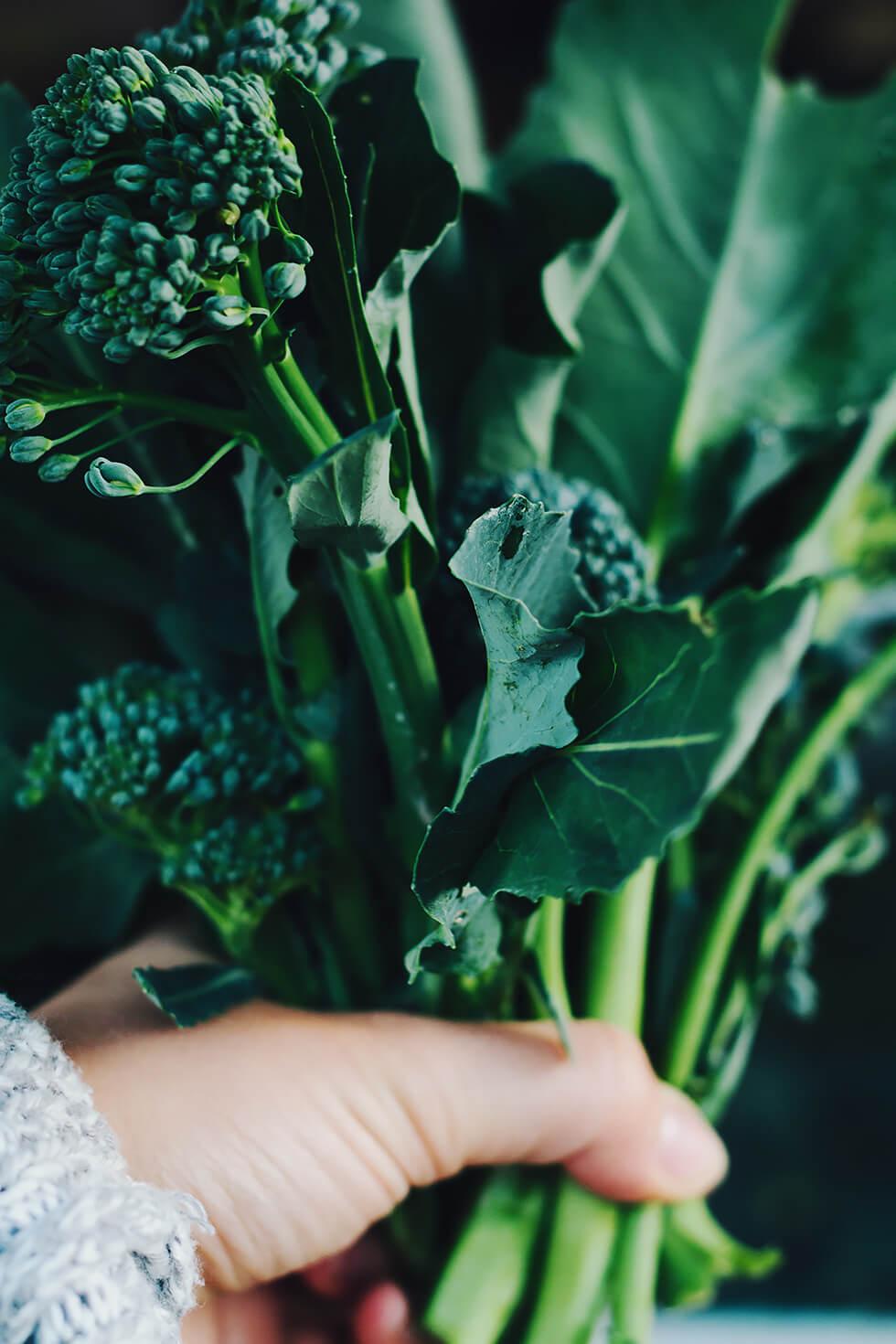 Ekologiska lokalodlade grönsaker i Hälsingland, Tjärnvik Gård