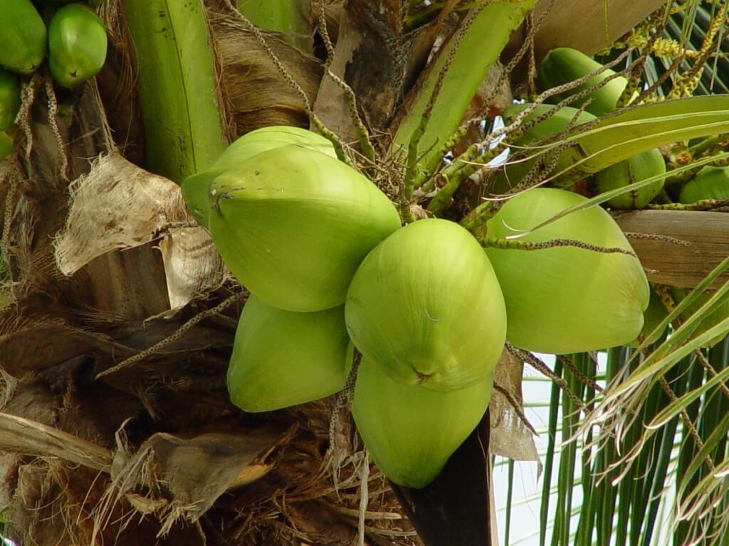 health-benefits-of-drinking-coconut-water