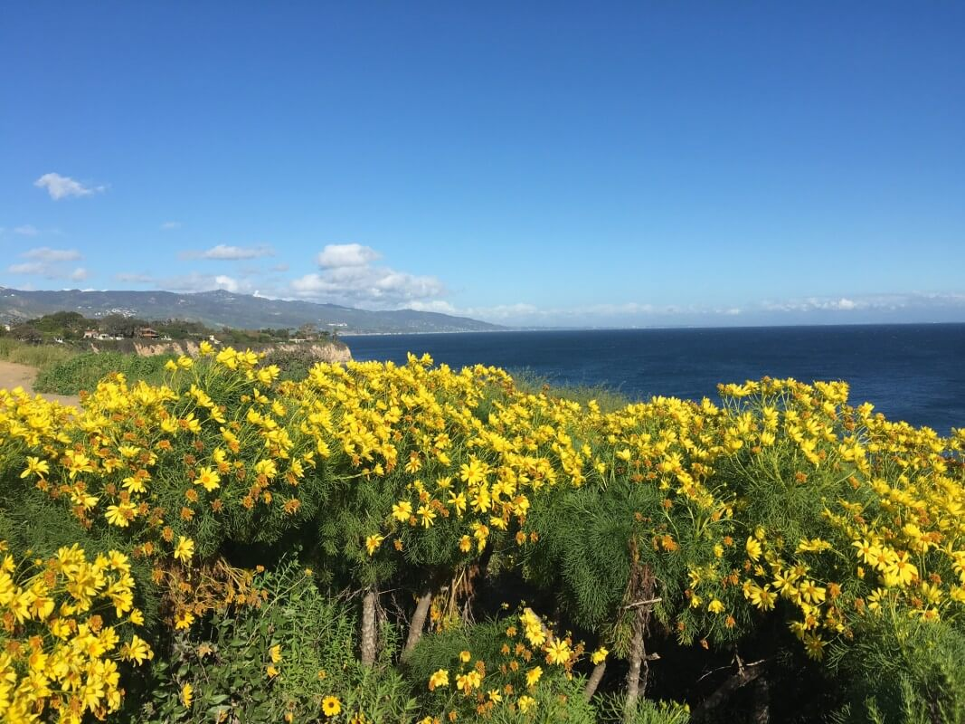 pring flowers point dume malibu