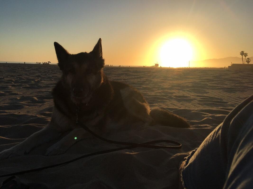 Solnedgång Venice Beach