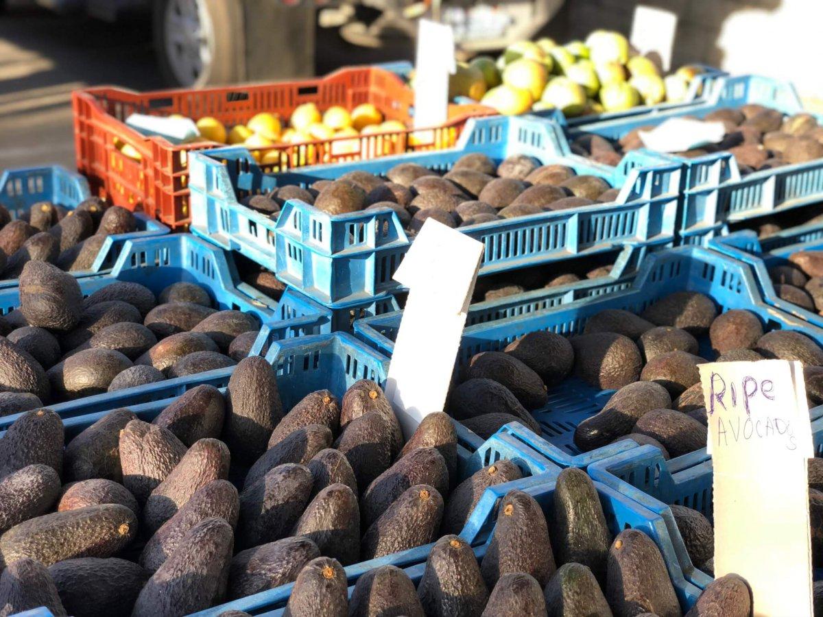 farmers market venice 5