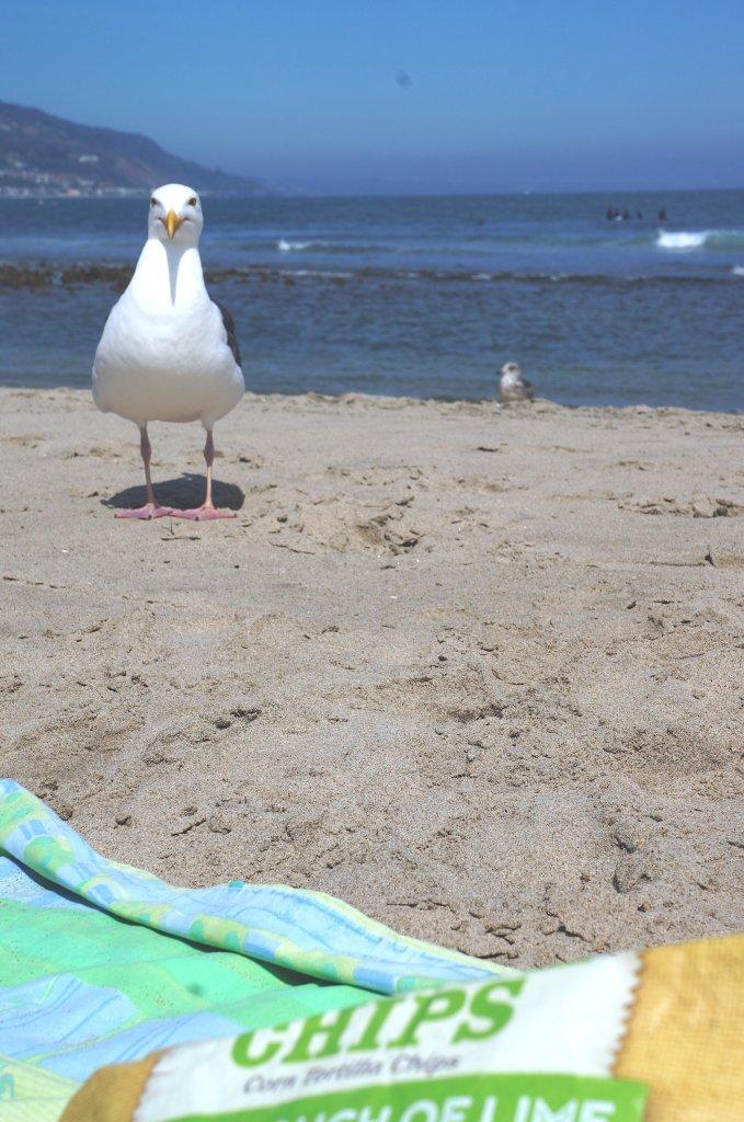 Oddeco   En dag på Malibu beach
