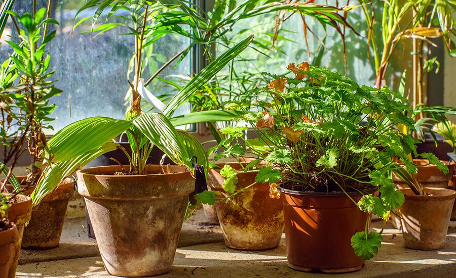 bästa luftrenare växter